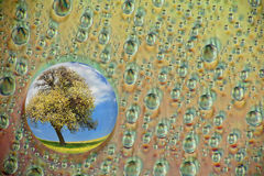 Water drops. Close up of water drops with spring tree inside stock photo