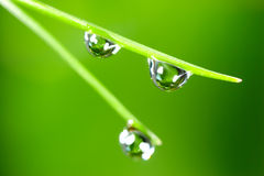 Water  Drops. Water drops on the fresh green grass. Super Macro Royalty Free Stock Photography