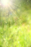 Water Drops. Royalty Free Stock Photography