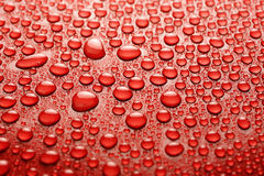 Water drops. On a red background Stock Images