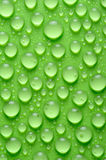 Water drops. On a green background Royalty Free Stock Images