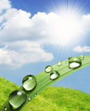 Water drops. Green leaf with water drops Stock Images