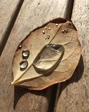 Water drops on a autumn leave. Close up of practical instrument in its surroundings Stock Images