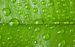 Water drops background texture. Stock Image