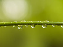 Water Drops on Bamboo Shoot Royalty Free Stock Photos