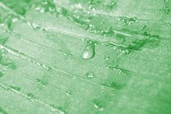 Water drops on banana leaves can be used as background images stock photos
