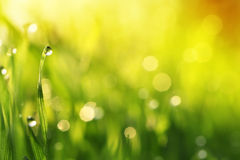 Water drops on blade of grass Stock Images
