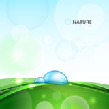 Water drops on blade of grass. Water drops on blade of green grass royalty free illustration