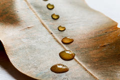 Water drops on brown leaves Royalty Free Stock Images
