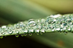 Water. Drops captured on grass Stock Images