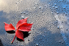 Water drops on car paint with red leaf Royalty Free Stock Photos