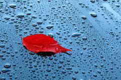 Water drops on car paint with red leaf Royalty Free Stock Photo