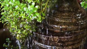 Water drops cascade green leaves stock footage