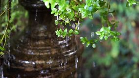 Water drops cascade from green leaves stock video footage
