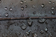 Water drops closeup on feather Royalty Free Stock Image