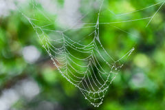 Water drops on cobweb Royalty Free Stock Photography