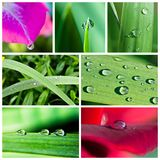 Water drops collage. Fresh water drops collage made from seven photograph Stock Photos