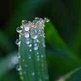 Water drops of dew on grass with soft focus Royalty Free Stock Photo