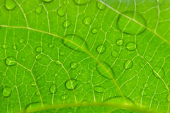 Water drops. Water drop on the green leaf after rain season Royalty Free Stock Photography
