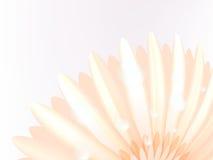 Water drops on elegant gerbera petals. plus EPS10 Royalty Free Stock Photo