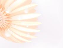 Water drops on elegant gerbera petals. plus EPS10 Stock Photos