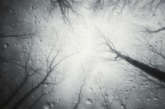 Water drops falling in forest from above Stock Photo