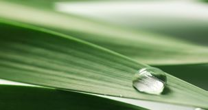 Water drops falling on green leaf stock video footage