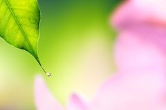 Water drops falling from a leaf Royalty Free Stock Photos