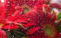 Water drops upon a flower background Stock Images