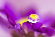 Water drops on flowers Royalty Free Stock Photo