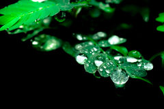 Water drops in fresh garden. Water drops in fresh garden Royalty Free Stock Photos