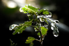 Water drops in fresh garden. Water drops in fresh garden Stock Photos