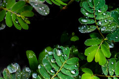 Water drops in fresh garden. Water drops in fresh garden Stock Images