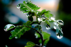 Water drops in fresh garden. Water drops in fresh garden Royalty Free Stock Photography