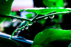 Water drops in fresh garden. Water drops in fresh garden Stock Photo