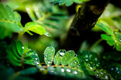 Water drops in fresh garden. Royalty Free Stock Photography