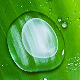 Water drops on fresh green leaf Stock Photo