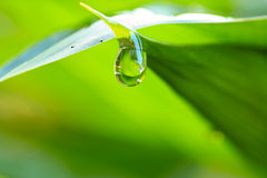 Water drops on fresh green leaf Stock Photos