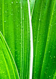 Water drops on fresh green leaf Stock Images