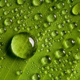 Water drops on fresh green leaf Stock Photography