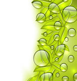 Water drops on fresh green leaves texture, copy space for your t Stock Images