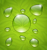 Water drops on fresh green leaves texture Royalty Free Stock Photography