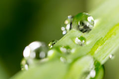 Water drops on the fresh green shoot. Stock Photos