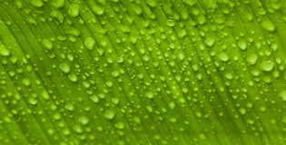 Water drops on a fresh leaf Stock Images