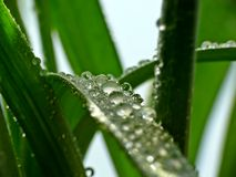 Water drops on grass Royalty Free Stock Images