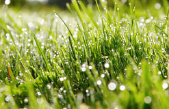 Water drops on the grass. Stock Photo