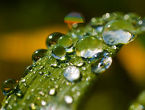 Water drops on grass. Water drops on green grass Stock Photos