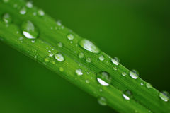 Water drops on a grass Stock Photography