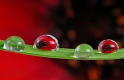 Water drops on grass blade Royalty Free Stock Image