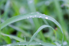 Water drops on grass Royalty Free Stock Image